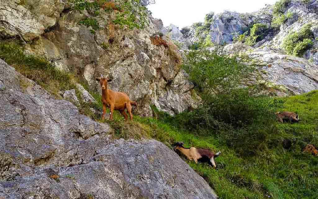 ruta-del-cares-picos-da-europa-spain-trekking-vagamundos-8