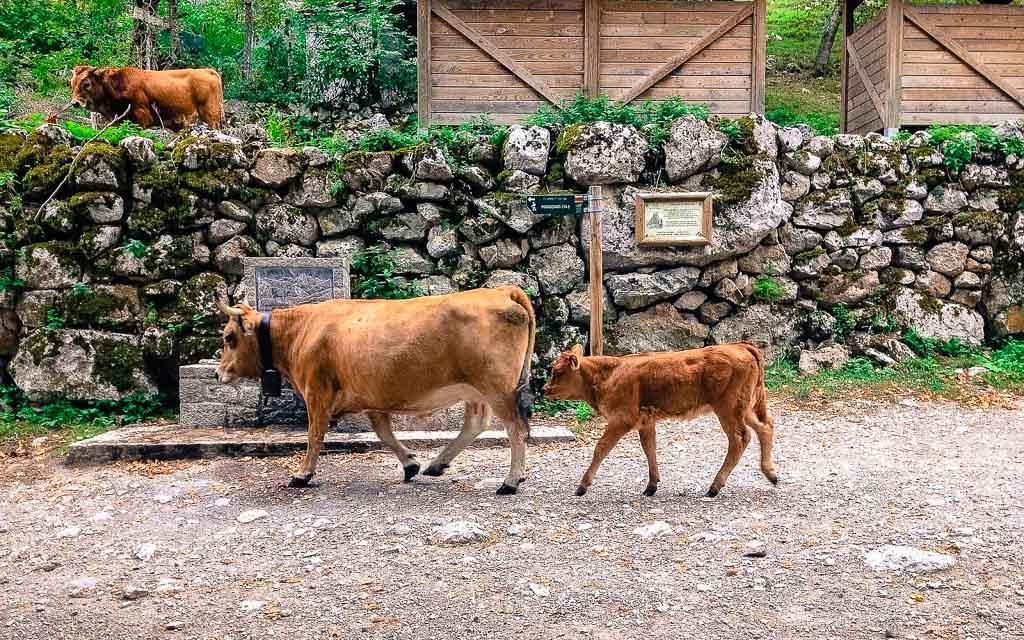 bulnes-picos-de-europa-trekking-vagamundos-15