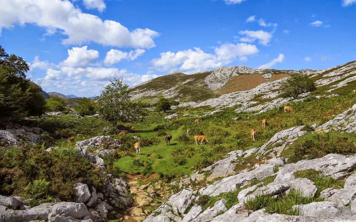 lagos-de-covadonga-picos-de-europa-trekking-vagamundos-2