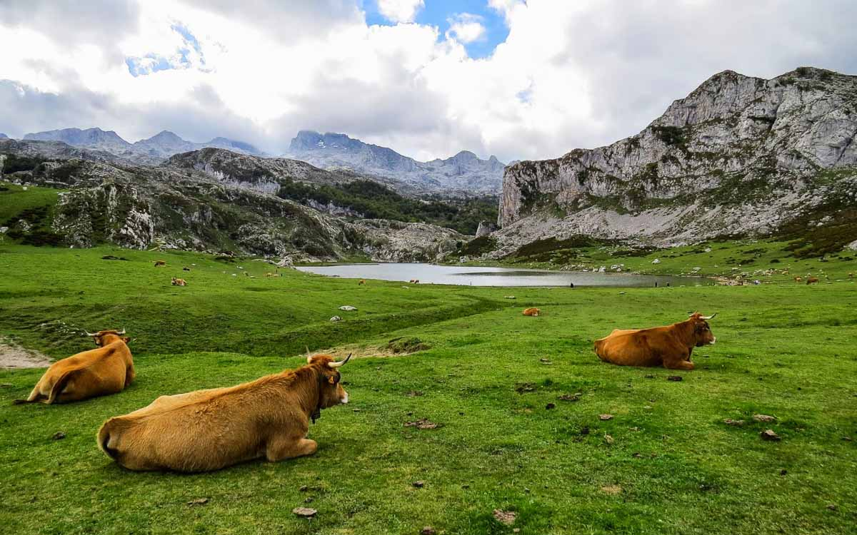 lagos-de-covadonga-picos-de-europa-trekking-vagamundos-9