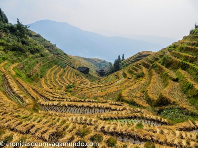 Dragon Backbone Rice Terraces