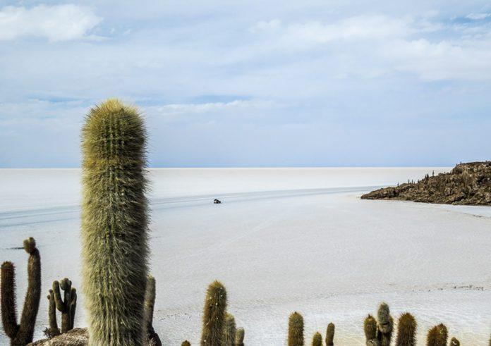 isla-del-pescado-salar-uyuni-bolivia