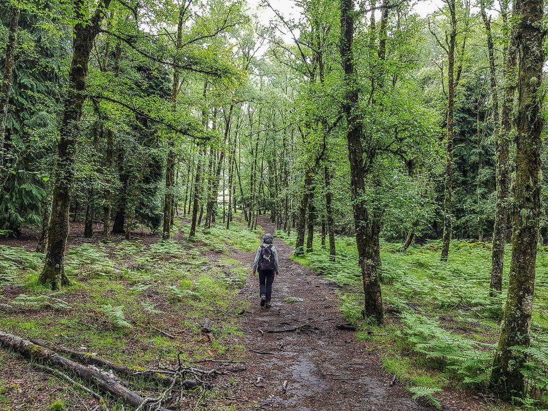 Trilhos e Percursos Pedestres - Trekking