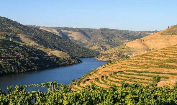 Trilho Vinho Do Porto – Lamego