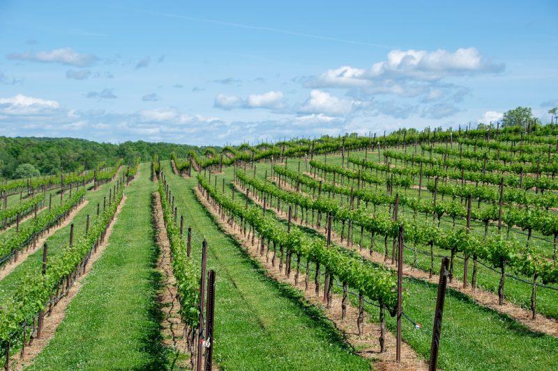 Provas de Vinhos em Bordéus