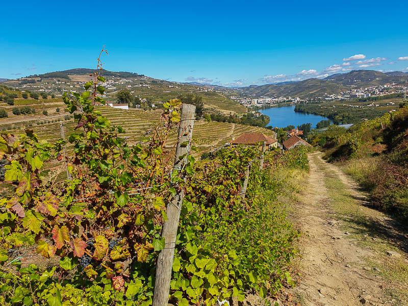 Trilho do Vinho do Porto